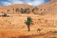 Desert. Ldesert andscape with a camel Royalty Free Stock Photo