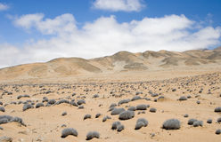 Desert. Landscape in northern Chile Royalty Free Stock Photos