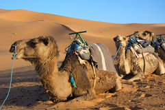 Into the desert Stock Image