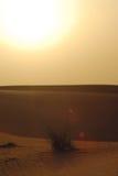 Desert. Waves of sand dunes in the desert of Arabian peninsula Stock Photos