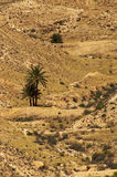 Desert 2. Solitary palm trees in the middle of desert, Tunisia Royalty Free Stock Photography