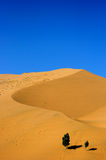 Desert. A serpentine moving dunes,curvaceous Stock Photography