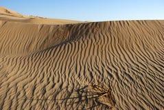 Desert. The sandy desert in the west Oman Royalty Free Stock Photo