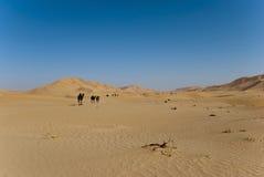 Desert. The sandy desert in the west Oman Stock Image