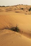 Desert. VIew of sand and vegetation in the desert of Khuri, north india, Rajasthan Royalty Free Stock Photography