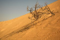 Desert. Dune of sand. Desert. India Stock Image