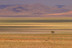 Desert 3. Some green in the Namib desert in Namibia Royalty Free Stock Photo
