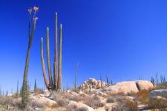 Desert. View of the desert of baja california, mexico Stock Photos