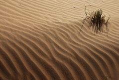 Desert. In Dubai, Waste land and grass Stock Images