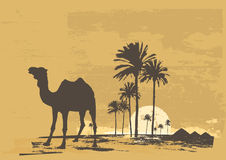 Desert. Vector illustration of  sunset in african desert. Camel and palms on grunge background Royalty Free Stock Images