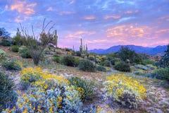 Free Desert Royalty Free Stock Photography - 51983647