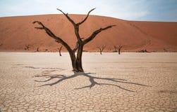 Free Desert Stock Images - 53577144