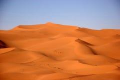 Desert. Sahara desert in Morocco stock image