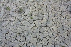 Desert. Cracked ground with few plants on it Stock Photos
