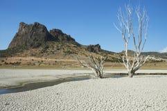 Desert. Photo on a sunny day stock photos