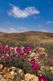 Desert. Life signs in the desert Stock Photos