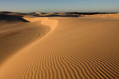 Desert. Stockton sand dunes in Anna Bay, NSW, Australia. Beautiful sand ripples and curves with dramatic shadows royalty free stock image