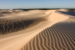 Desert. Stockton sand dunes in Anna Bay, NSW, Australia. Beautiful sand ripples and curves with dramatic shadows stock photography