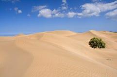 Desert. Sand, waves and vegetation Stock Photos