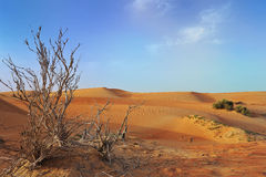 Desert. Dead tree with dunes in the background (Dubai, Desert Stock Photos