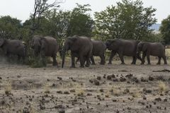 Free Desert-Adapted Elephant Herd Royalty Free Stock Photography - 44410037