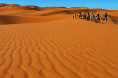 Desert adventure. Group of people on camels in the Sahara desert, Morocco Stock Photography
