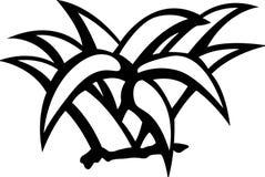 Desert agave or maguey plant vector illustration Stock Image