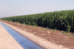 Desert Agriculture Farming Irrigation Canal. Full agricultural irrigation canal brings water to miles of the dry desert farm fields of Arizona Royalty Free Stock Image