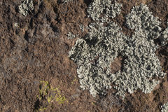 Desert Algae example Stock Photos