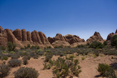 Desert american landscape royalty free stock photo