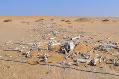 Desert with animal bones Stock Photography