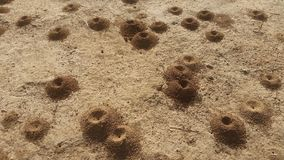 Desert ant hills. Nature still live Royalty Free Stock Photo