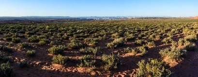 Desert around  Grand Canyon Horseshoe Bend  Page Arizona. USA civered with green plants Stock Image