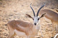 Desert Art. This image was taken in Liwa Desert, Abu Dhabi Royalty Free Stock Image