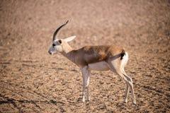 Desert Art. This image was taken in Liwa Desert, Abu Dhabi Royalty Free Stock Images