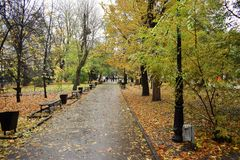 Road in autumn Park blank Royalty Free Stock Photography