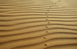 The desert background Stock Photography