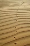 The desert background Stock Image