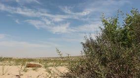 Desert background stock video