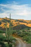 Desert Backroad. A winding back road snakes through desert scrub and giant saguaro cactus at sunset Stock Images