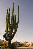 In the desert of baja california Stock Images