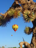 Desert Balloon Race. Ht Air Balloon race in the desert, through Joshua Tree stock photography