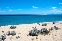 Desert beach Royalty Free Stock Photo