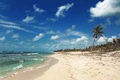 Desert beach. A desert beach near tulum, mexico Stock Photo