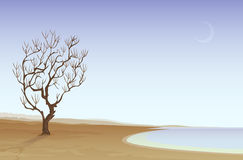 Desert beach vector illustration