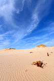 Desert Royalty Free Stock Image