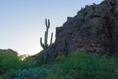 Desert Beauty Sunset. Amazing cactus with superstition mountains and a sunset Stock Image