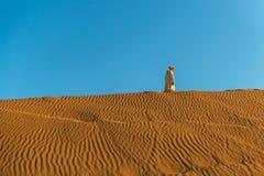 Desert. Beduin walking the dunes stock photos