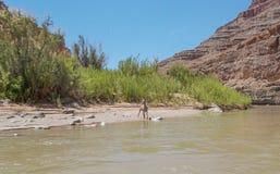 Desert Bighorn Sheep along San Juan River in Utah royalty free stock photo