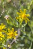 Desert in bloom Royalty Free Stock Images